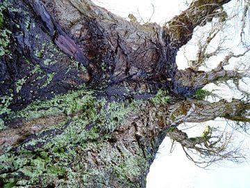 Tree Magic 101 van MoArt (Maurice Heuts)