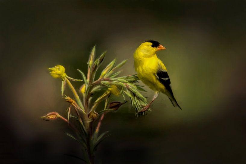 Goudsijs - Geel Zwarte Vogel Op Groene Plant van Diana van Tankeren