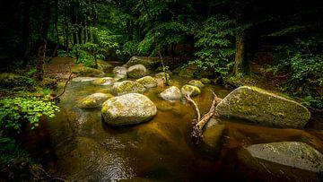 Bos met rotsen in rivier van Gerard Notenboom