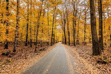 Herbst auf der Veluwe von Harry Schuitemaker