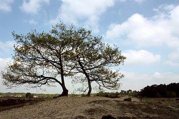 Drunense duinen van Peter Maessen