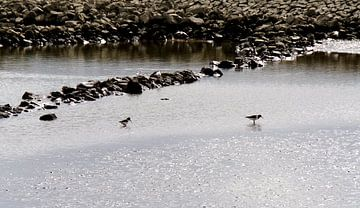 steltlopers in de rivier van joyce kool
