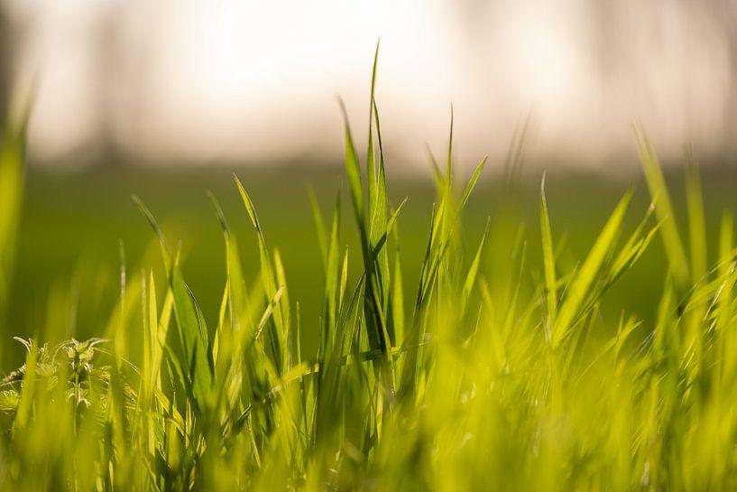 Gras von Florian Kampes