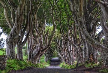 The Dark Hedges in Ballymoney, N. Ierland von Edward Boer