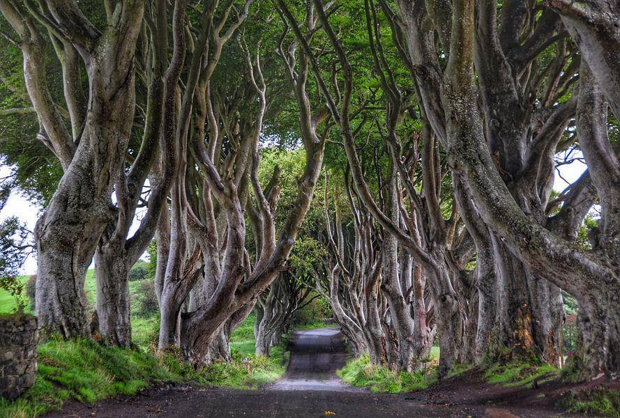 The Dark Hedges in Ballymoney, N. Ierland van Edward Boer