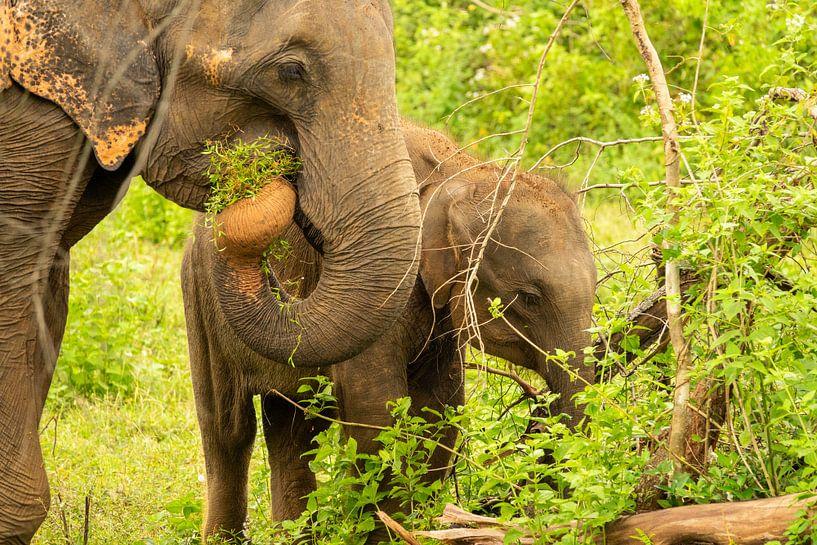 Elefant im Dschungel von Nicole Nagtegaal