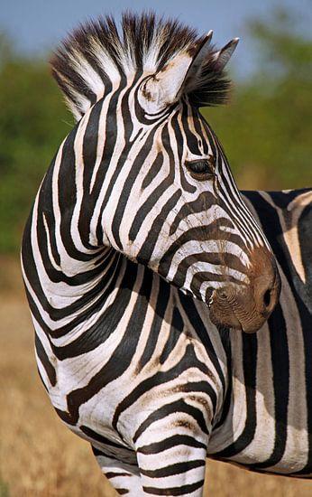 Look behind - Africa wildlife van W. Woyke