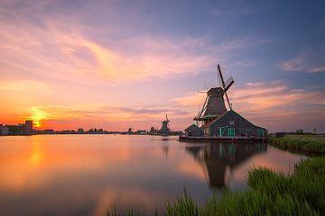 Nederlandse Zijdeachtige Zonsondergang van