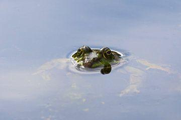 La grenouille sur Bernhard Kaiser
