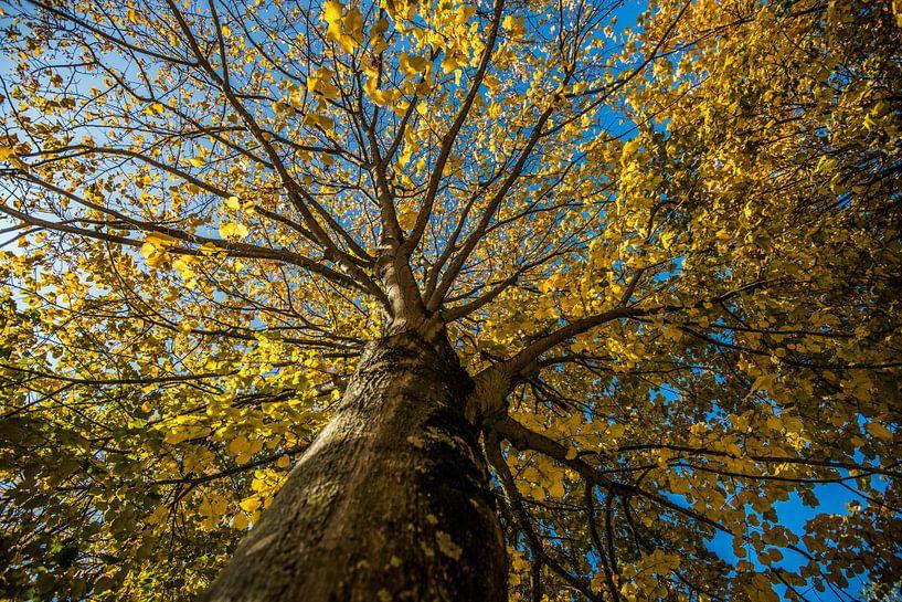 Prachtige boom met gele bloesem van Photobywim Willem Woudenberg
