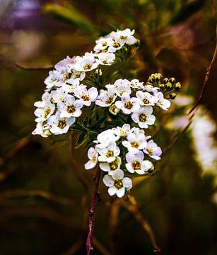 Blume Bokeh-Hintergrund von Frank Ketelaar