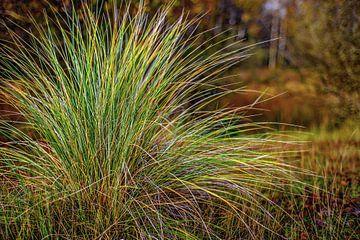 Herfstkleuren - Autumn colors  van Wim Goedhart