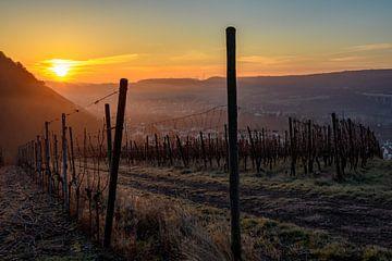 Sonnenaufgang im Weinberg von Heinz Grates