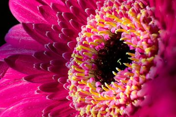Herz in rosa gelb von Joran Quinten