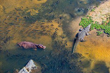 De Waterwereld van het nijlpaard en de krokodil van Sharing Wildlife
