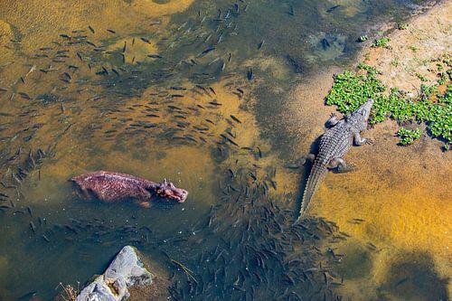 De Waterwereld van het nijlpaard en de krokodil