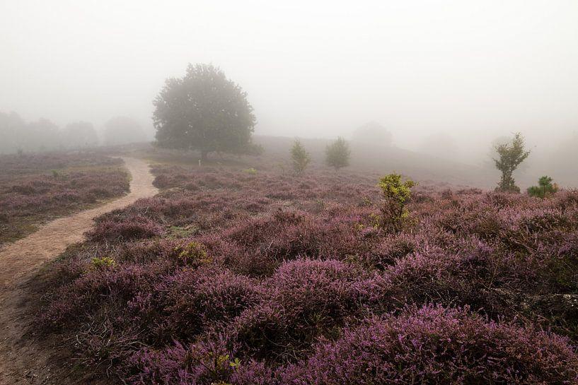 Heide in de Mist - deel 2 van Nuance Beeld