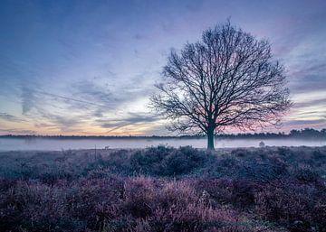 Bunter Sonnenaufgang in der Hoorneboegse Heide von Connie de Graaf