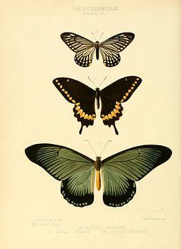 Vintage vlinder illustratie