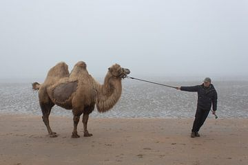 Das Meer-Kamel. von Kathy Orbie