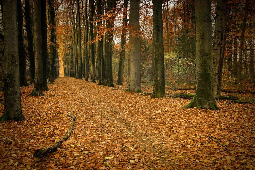 Herfst van Yvonne Kruders