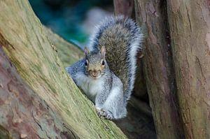 Een eekhoorn poseert spontaan van