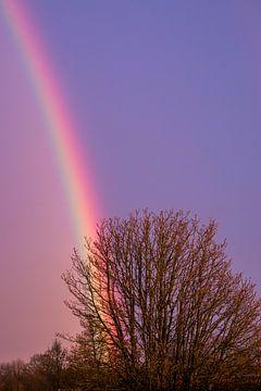 Regenboog door de boom van Jaap de Wit