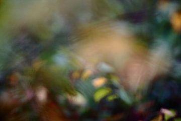 herfstkleuren van Severin Frank Fotografie
