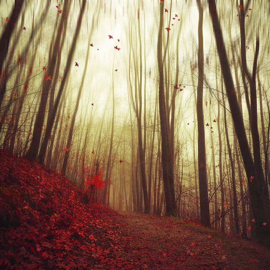 Falling leaves van Dirk Wüstenhagen