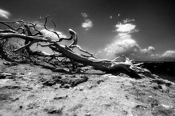 Wurzel in Agrilaopothamos, Karpathos, Griechenland von Peter Baak