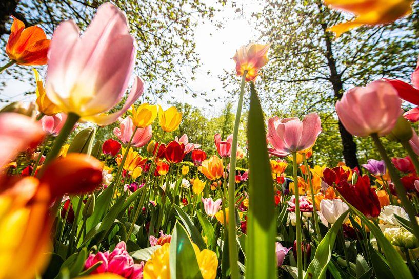 Kleurige Tulpen van Brian Morgan