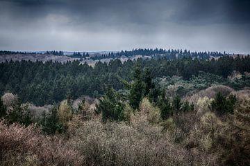 Limburger Waldlandschaft von MM Imageworks