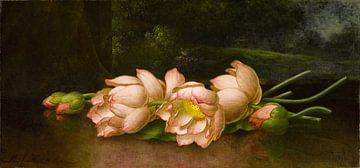 Fleurs de lotus, Martin Johnson Heade