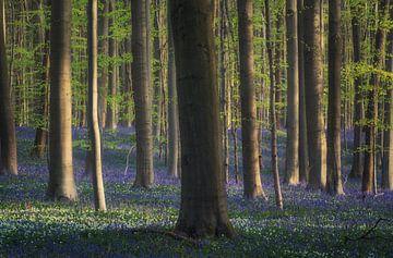 De generaal van het blauwe bos van Joris Pannemans - Loris Photography
