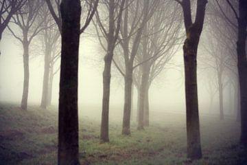 Bomen in mist van Gwen Mustamu