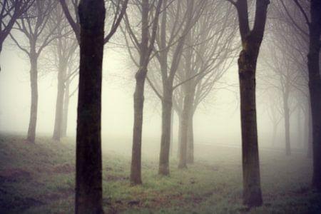 Bomen in mist