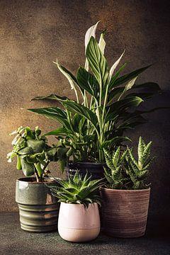 Zimmerpflanzen von Iryna Melnyk