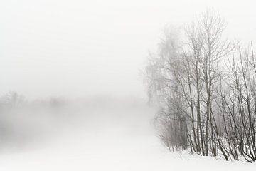 Wald im Nebel sur Max Schiefele
