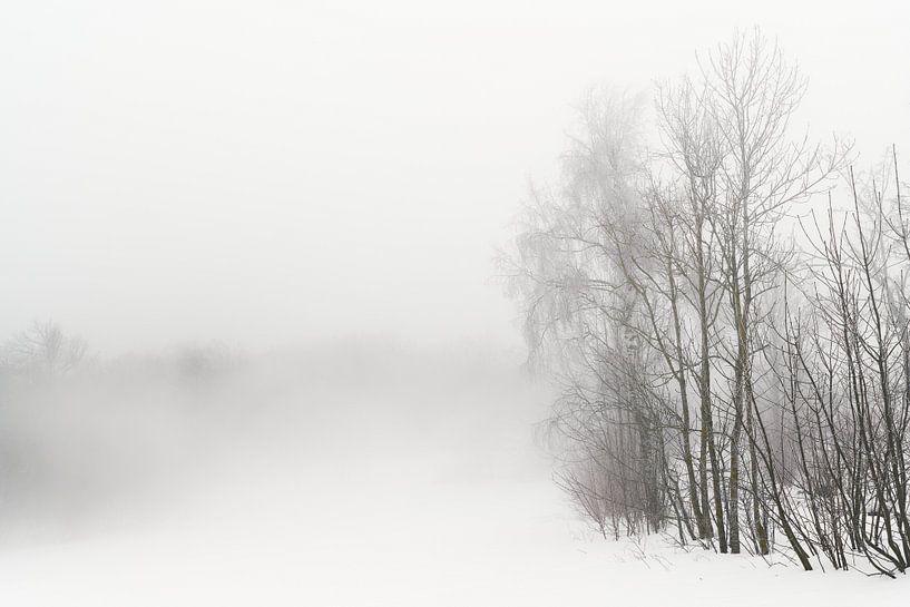 Wald im Nebel von Max Schiefele