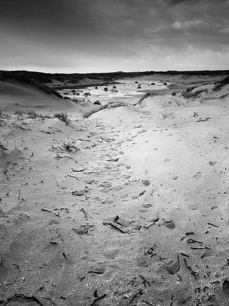 Nieuwe Duinen van David Hanlon