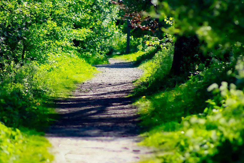 Grüner Weg am SurfLake von PhotoManiX Digital Photography