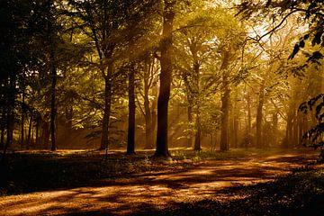Zonnenstralen in het bos van Bergen op Zoom van Andrea Korstanje