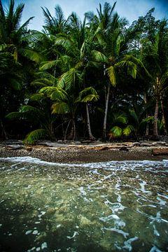 Île tropicale sur Elvin Boer