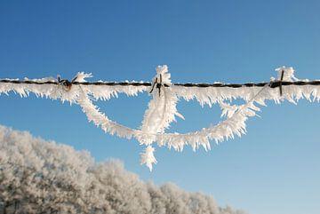 Winter op de Veluwe. von Fred Fiets