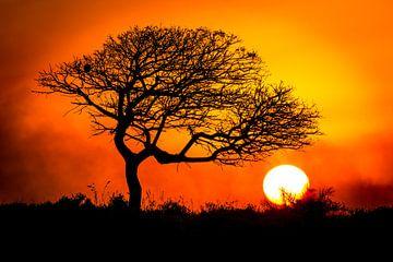 Südafrika Sonnenuntergang von Edwin Mooijaart