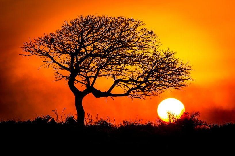 Afrikaanse zonsondergang van Edwin Mooijaart