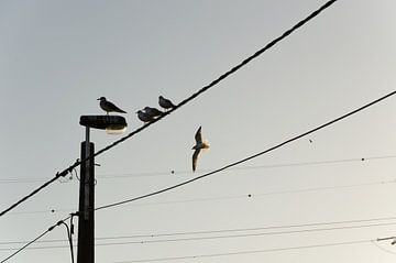 vogels op een telefoondraad sur Eline Willekens