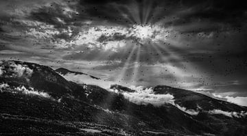 Vogels van Yann Mottaz Photography