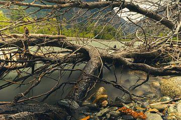 Omgevallen boom naast een rivier van Mike Van Zijderveld