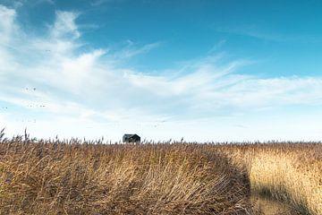 Typische Groninger Landschaft von P Kuipers